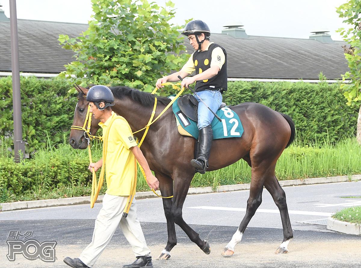 サンリヴァルの馬体写真