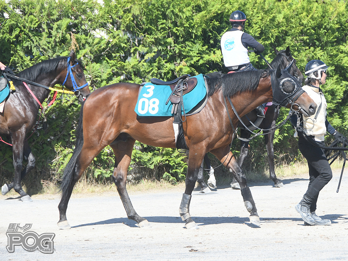 テイエムゲレイロの馬体写真