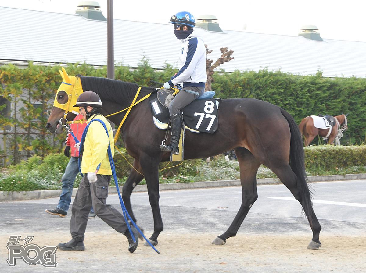 プリティーキッズの馬体写真