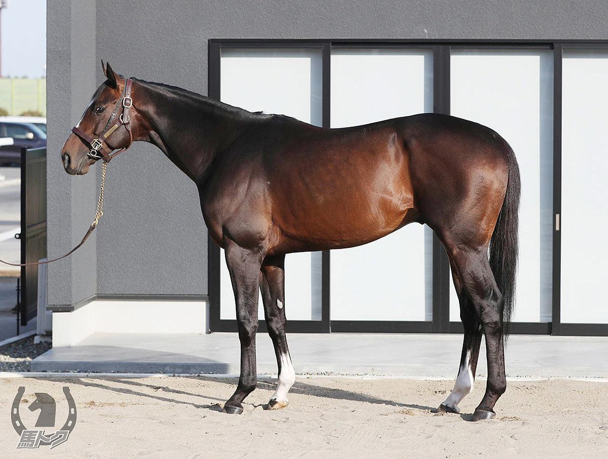 アルクトスの馬体写真