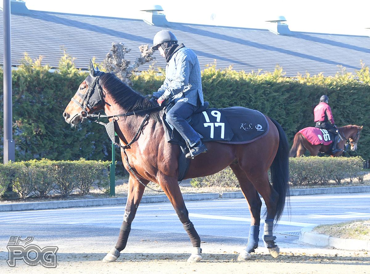 サパティアードの馬体写真