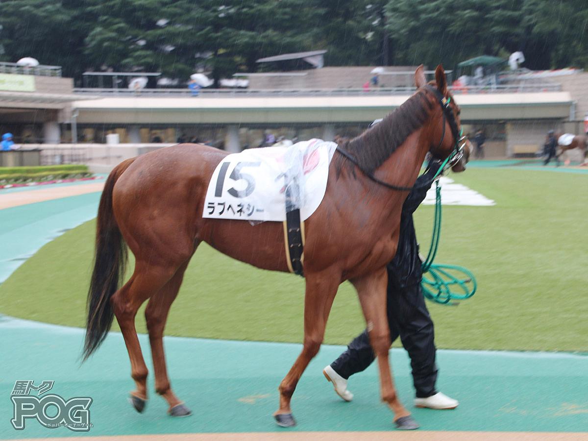 ラブヘネシーの馬体写真