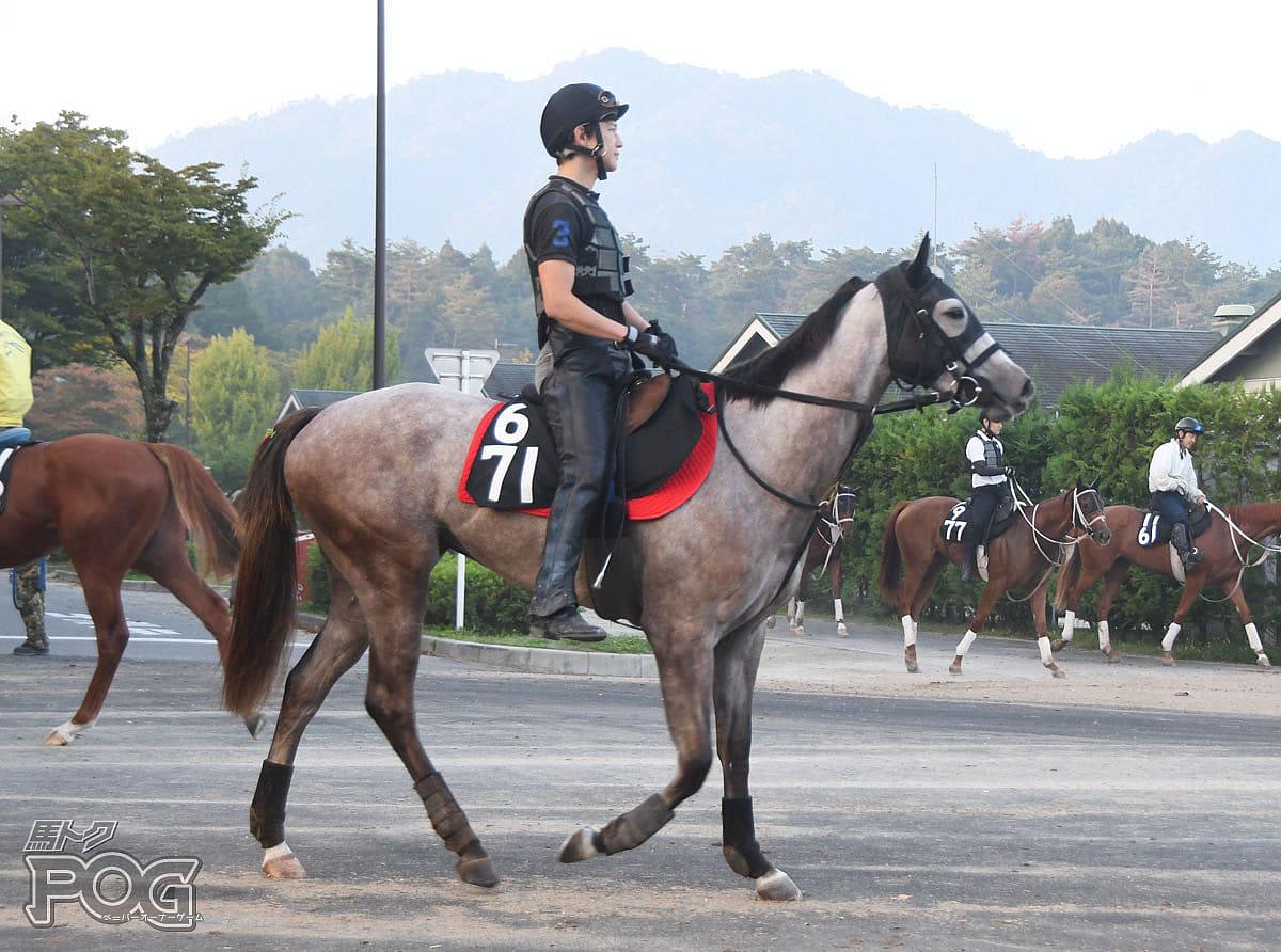 テイエムユキヒョウの馬体写真