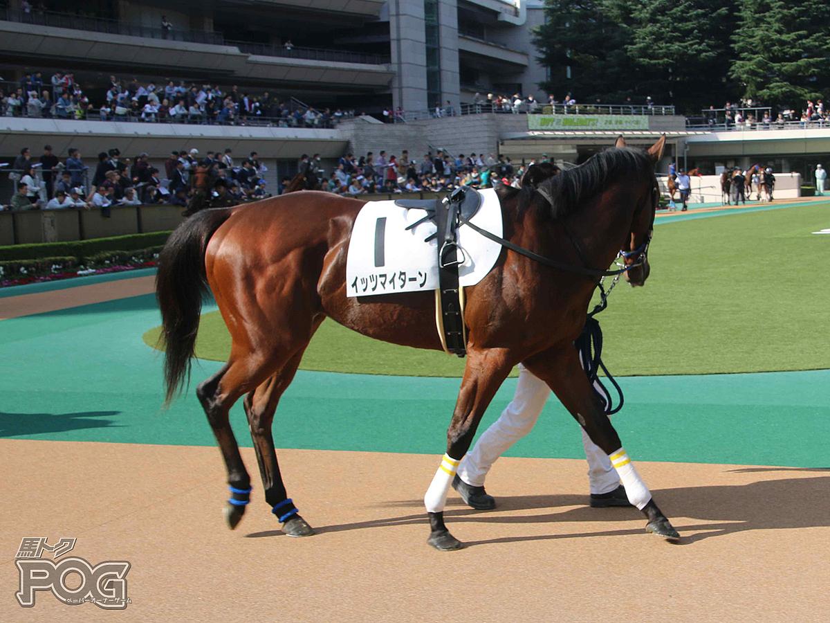 イッツマイターンの馬体写真