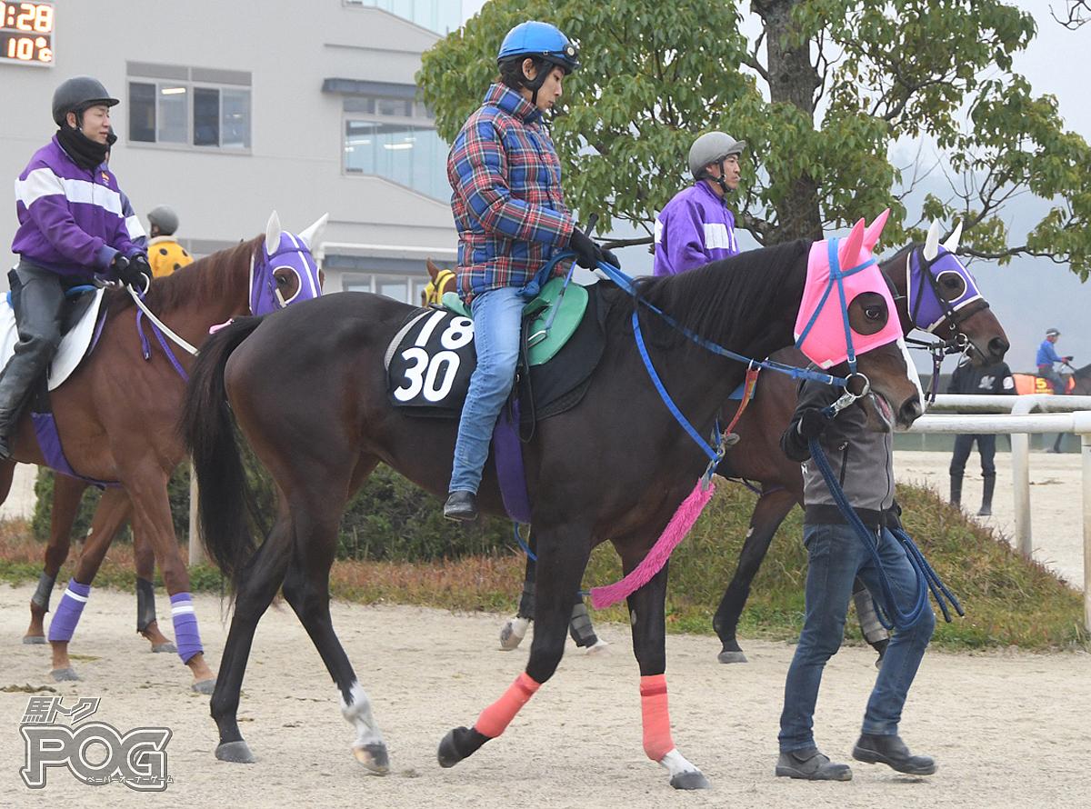 ギンコイエレジーの馬体写真