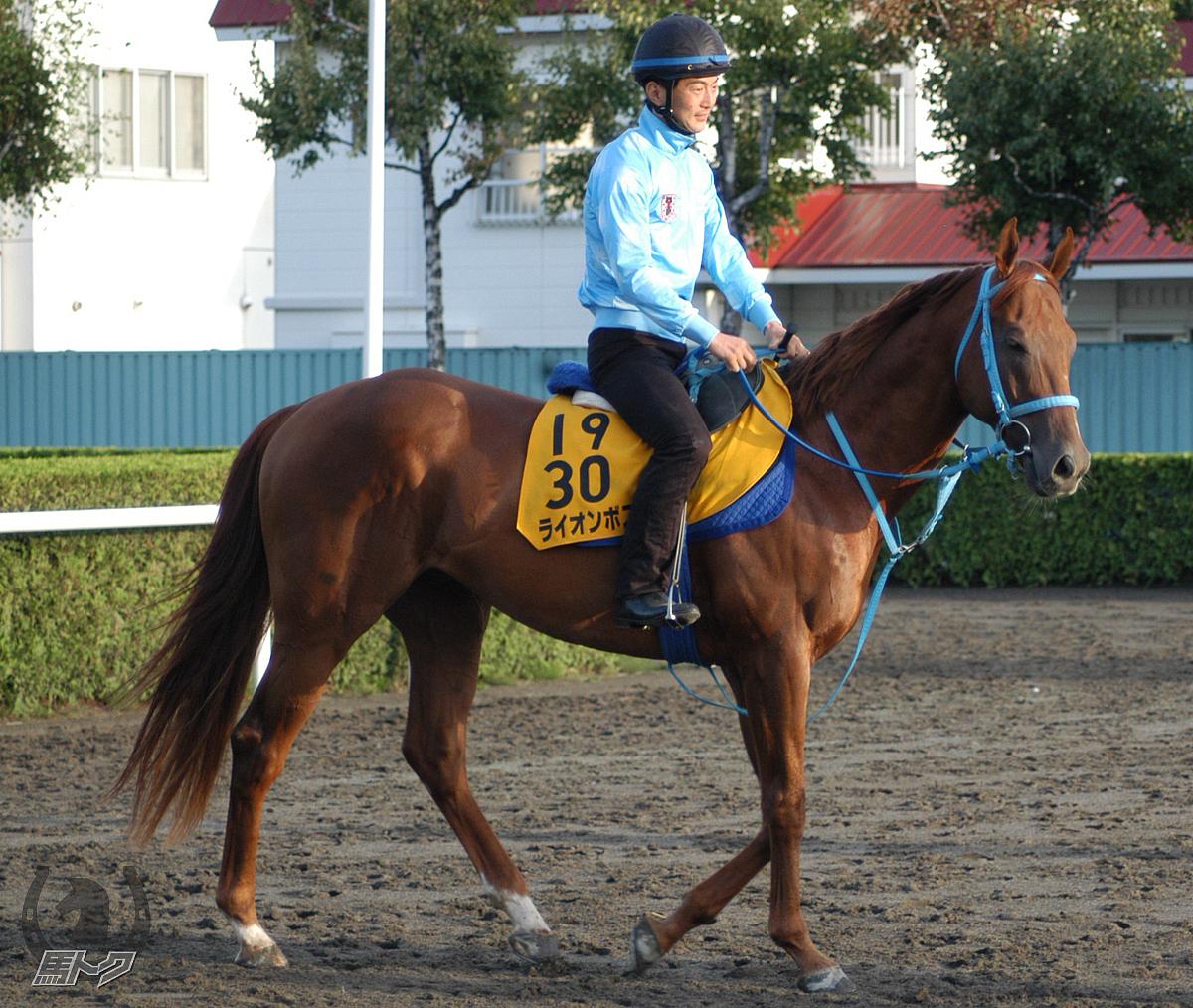 ライオンボスの馬体写真