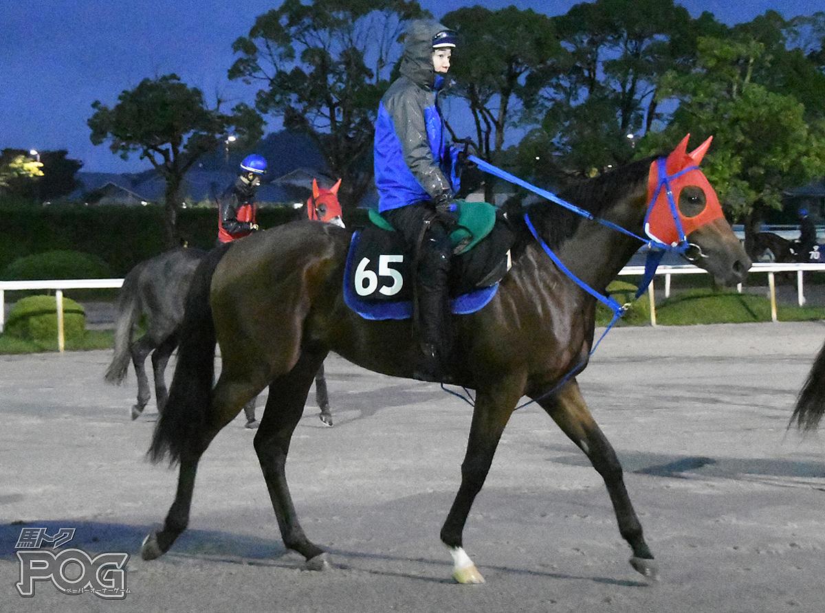 アリイタヤスの馬体写真
