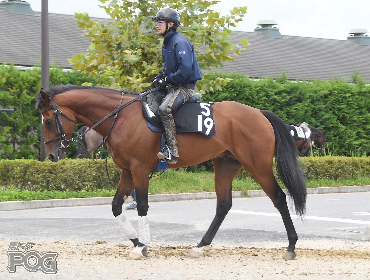 スターズテソーロの馬体写真