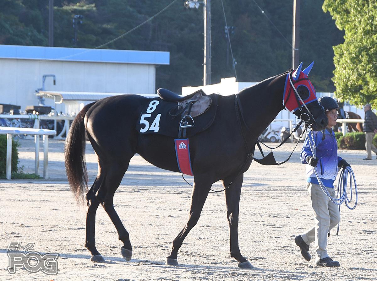 ビーユアヒーローの馬体写真