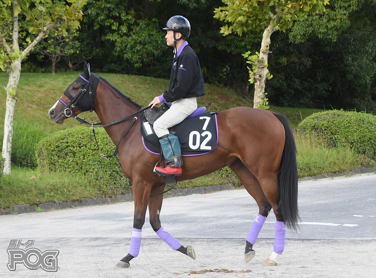 ドゥリアリティの馬体写真