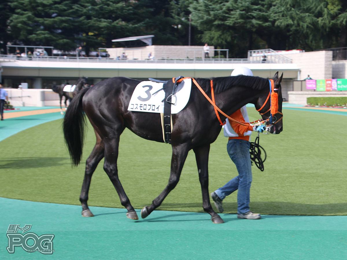 コスモロブロイの馬体写真