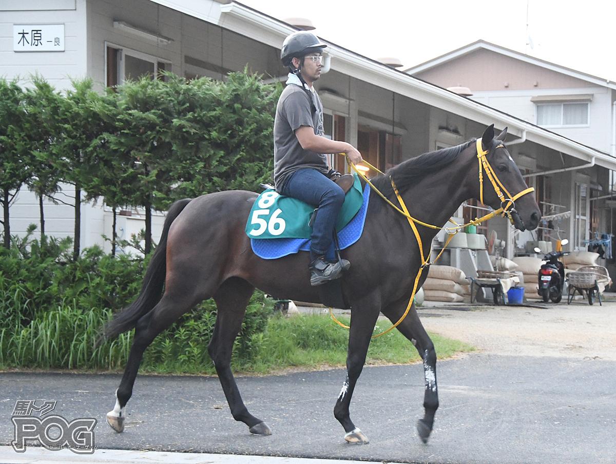 キンショーブラックの馬体写真