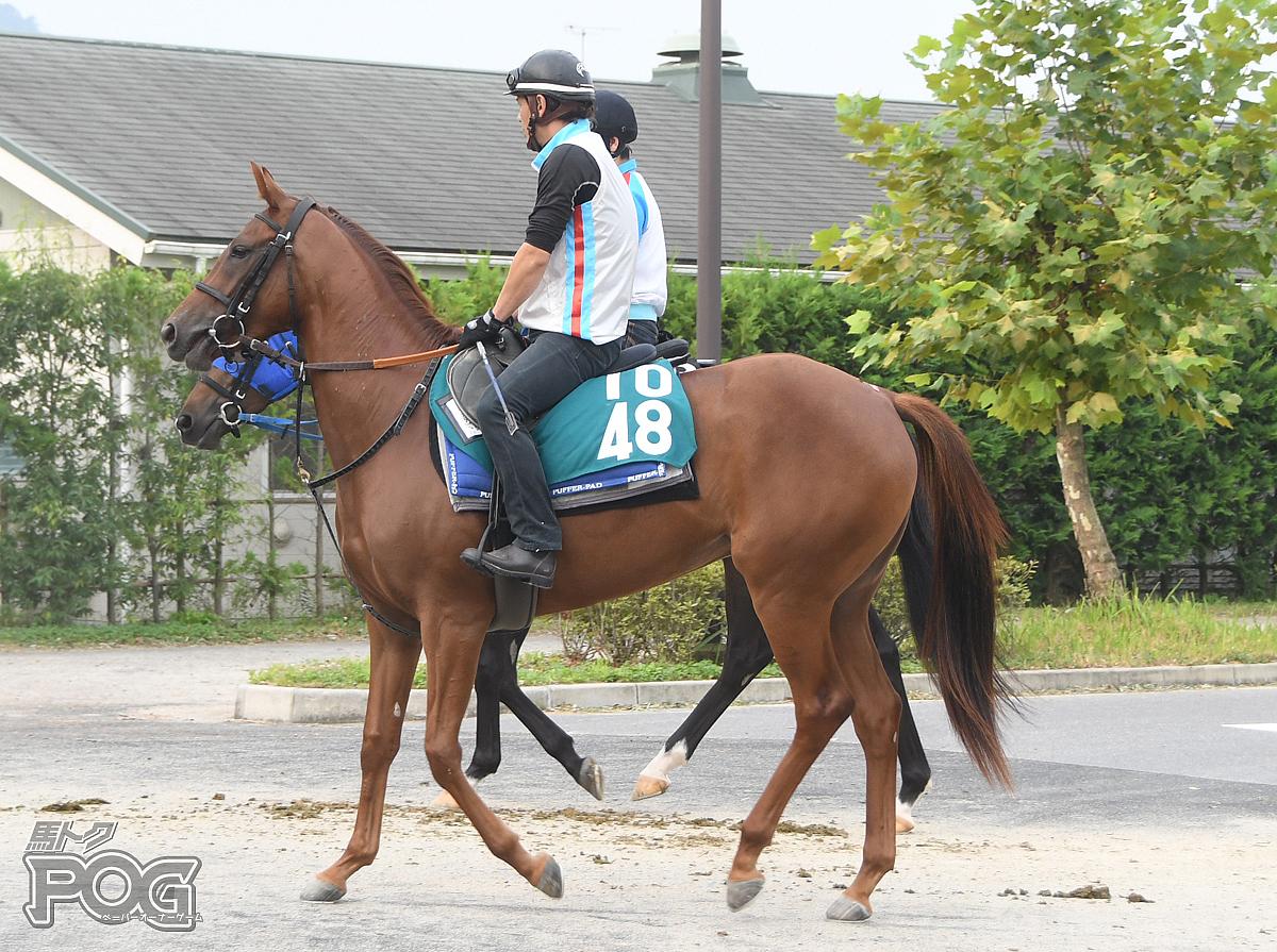ラインラピットの馬体写真