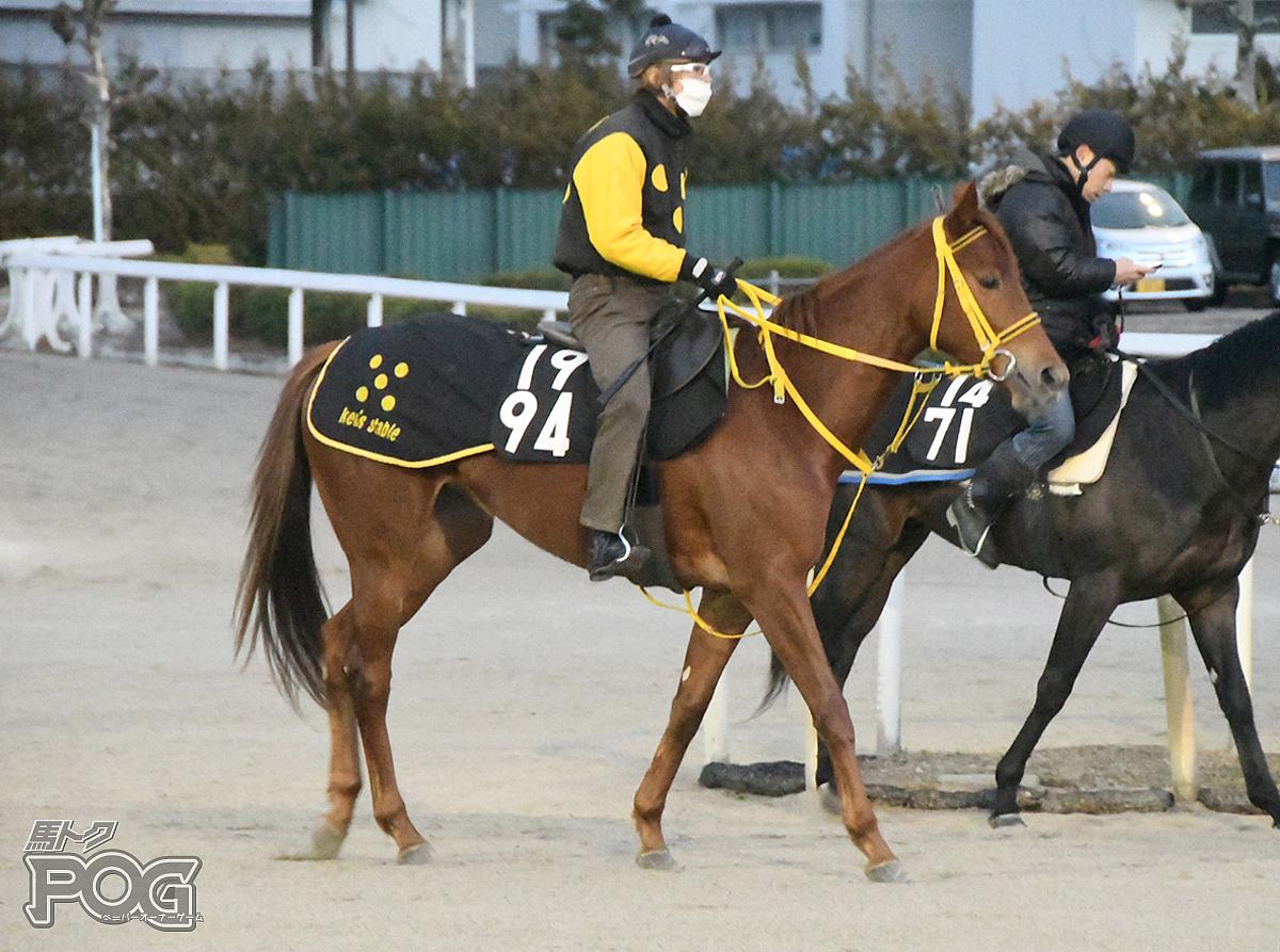 ハコダテダリアの馬体写真