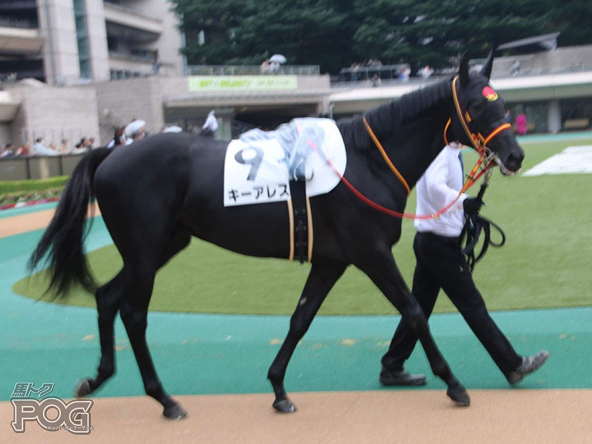 キーアレスの馬体写真