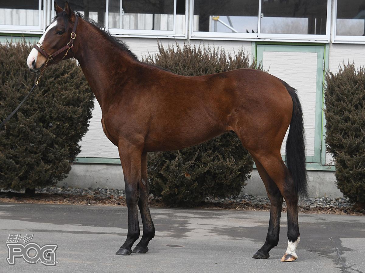ウインスラーヴァの馬体写真