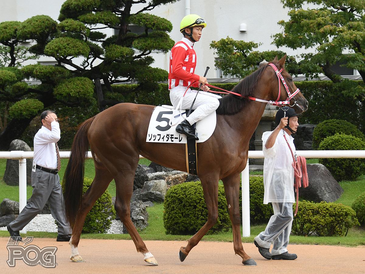 ソッフィダモーレの馬体写真