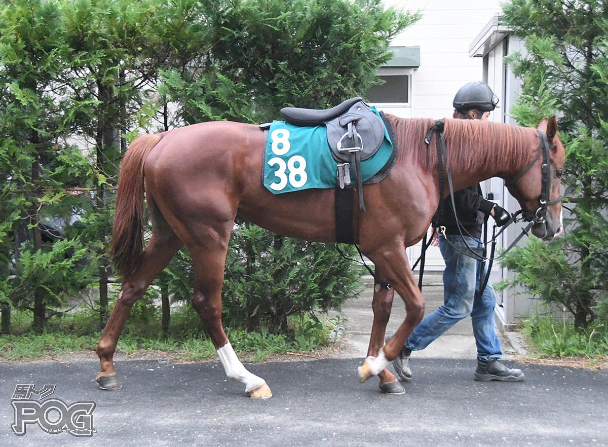 タガノヒバナの馬体写真