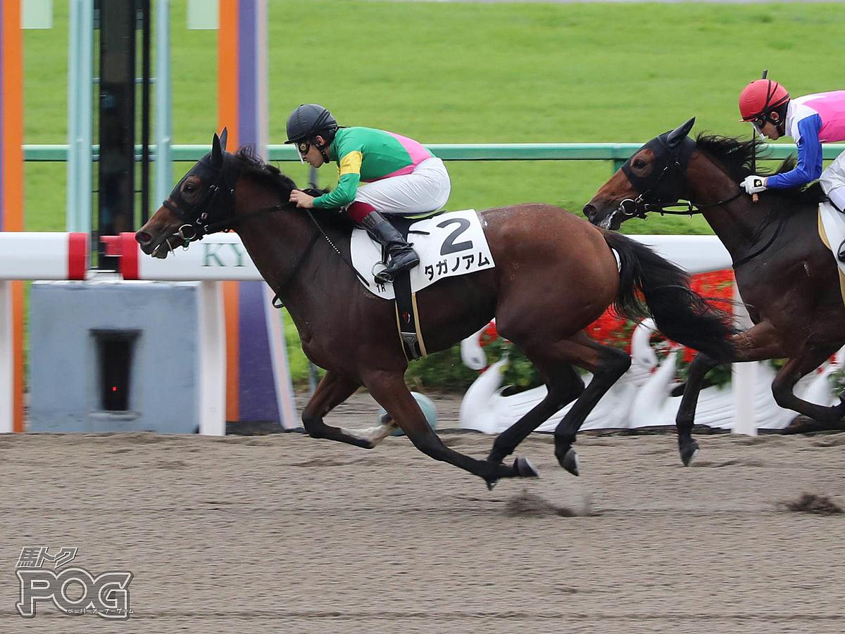 タガノアムの馬体写真