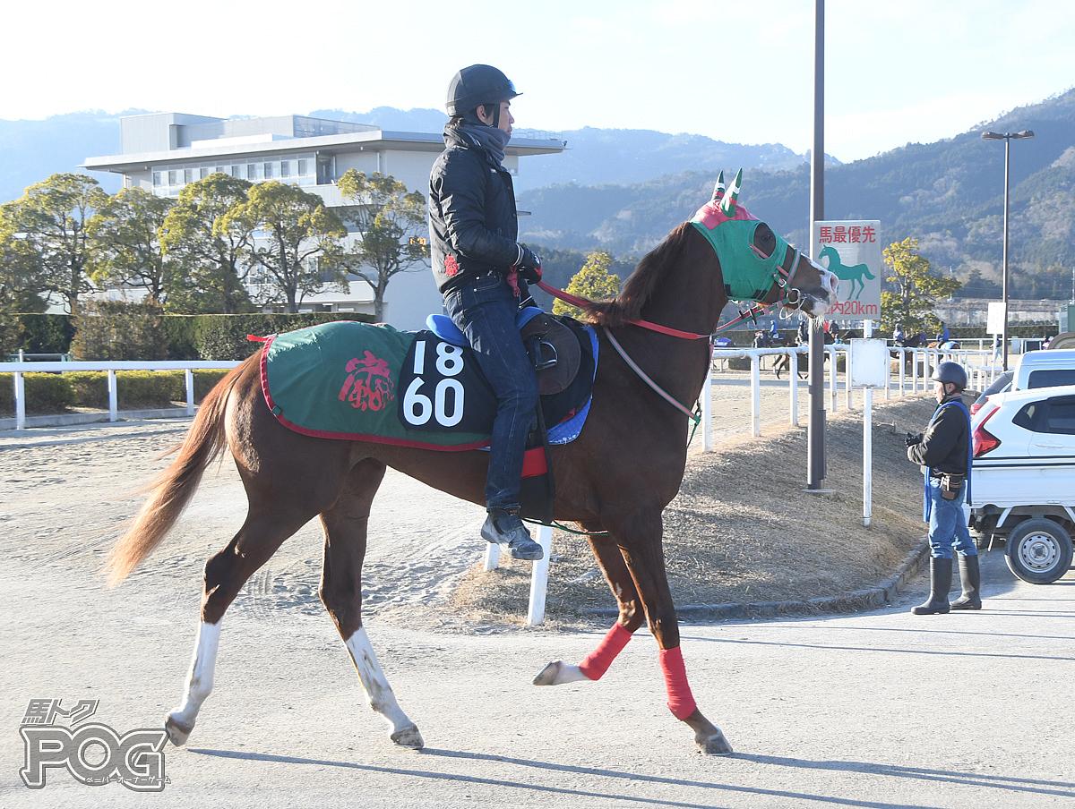 タガノユイの馬体写真