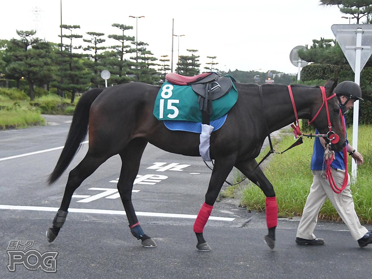 タガノシムナの馬体写真