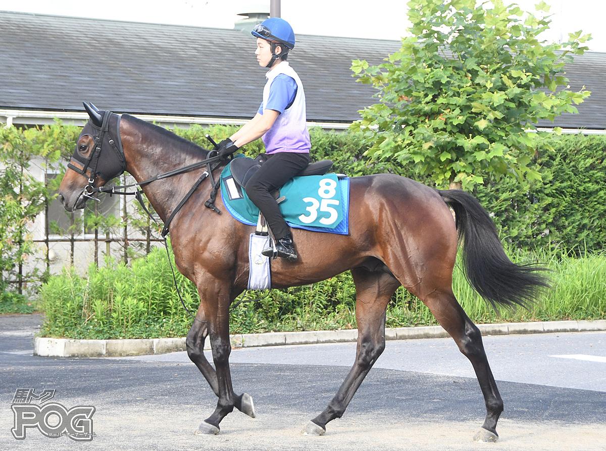 ドンアルゴスの馬体写真