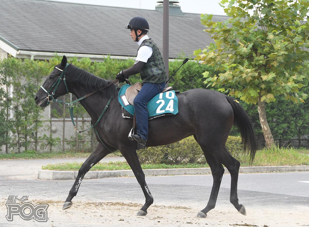 タガノマリーチャンの馬体写真