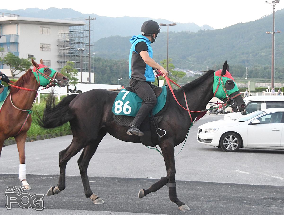 チャームリングの馬体写真