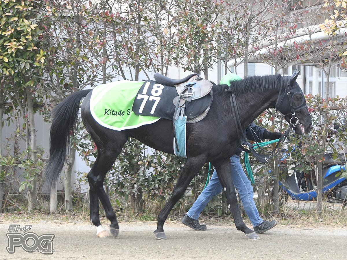 ヒルノコルドバの馬体写真