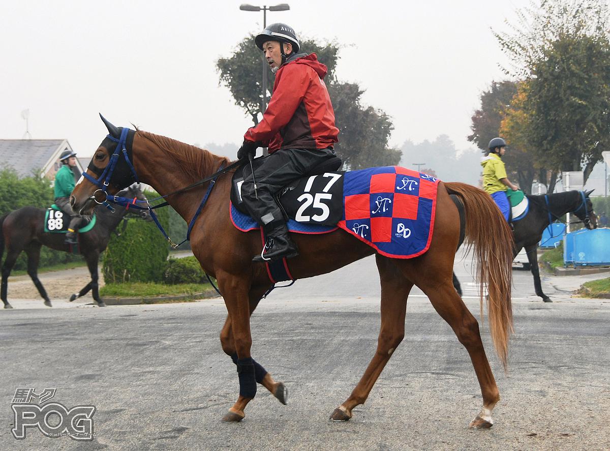 アモーレジョディーの馬体写真