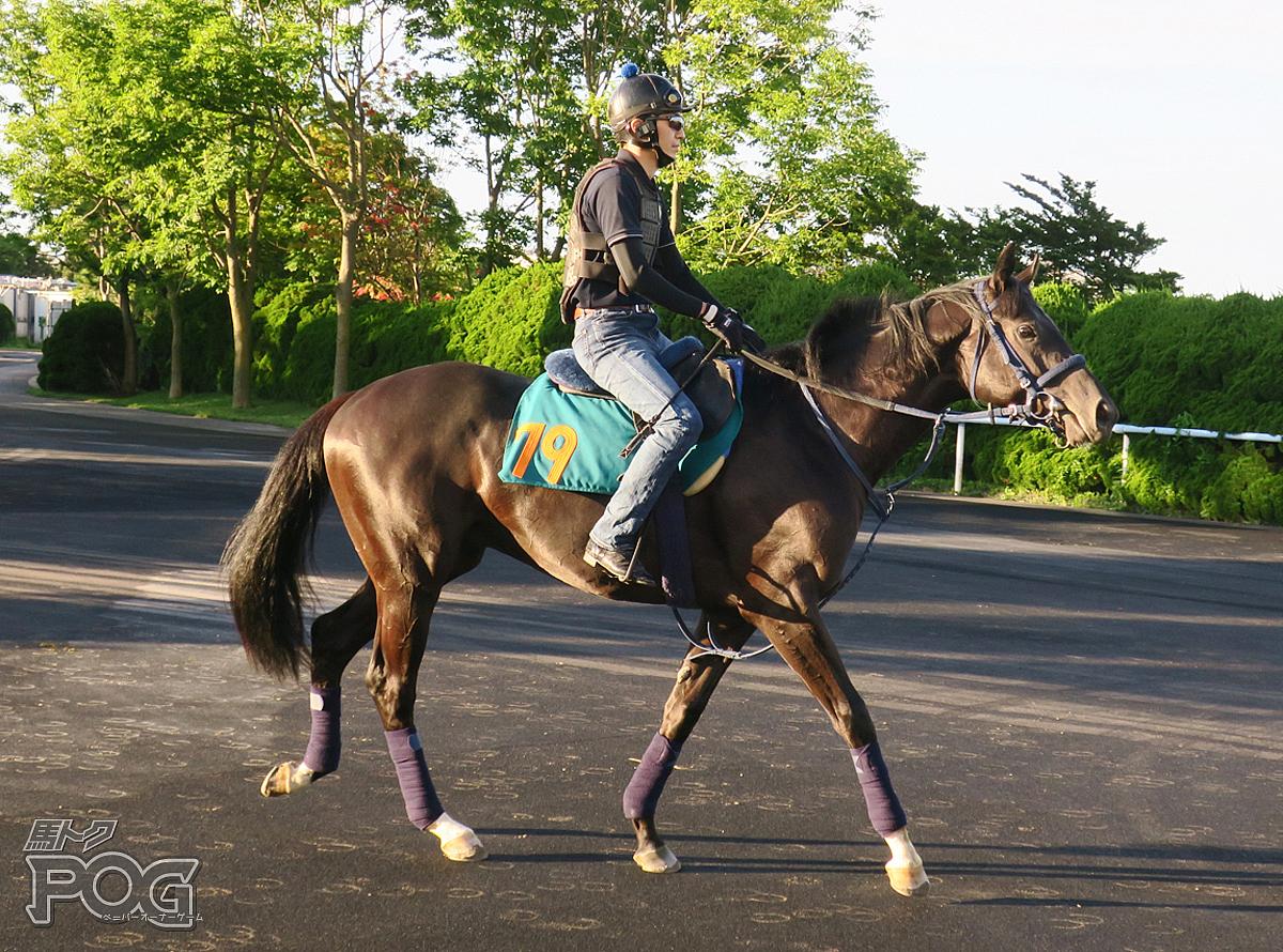 ボールドスパルタンの馬体写真