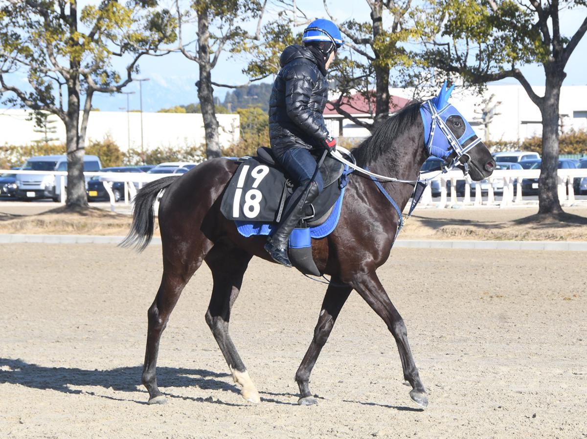 ヤマニンフェイトの馬体写真