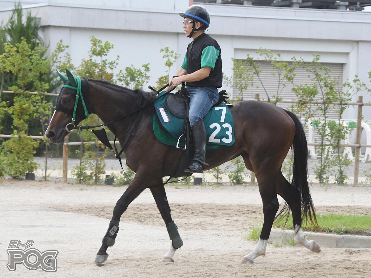 クレマチスの馬体写真