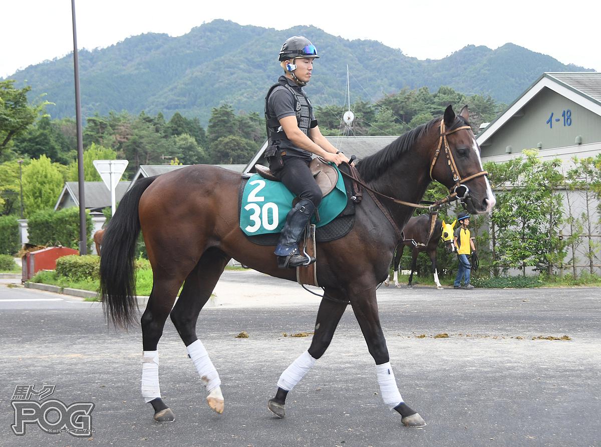 アメイジングセンスの馬体写真