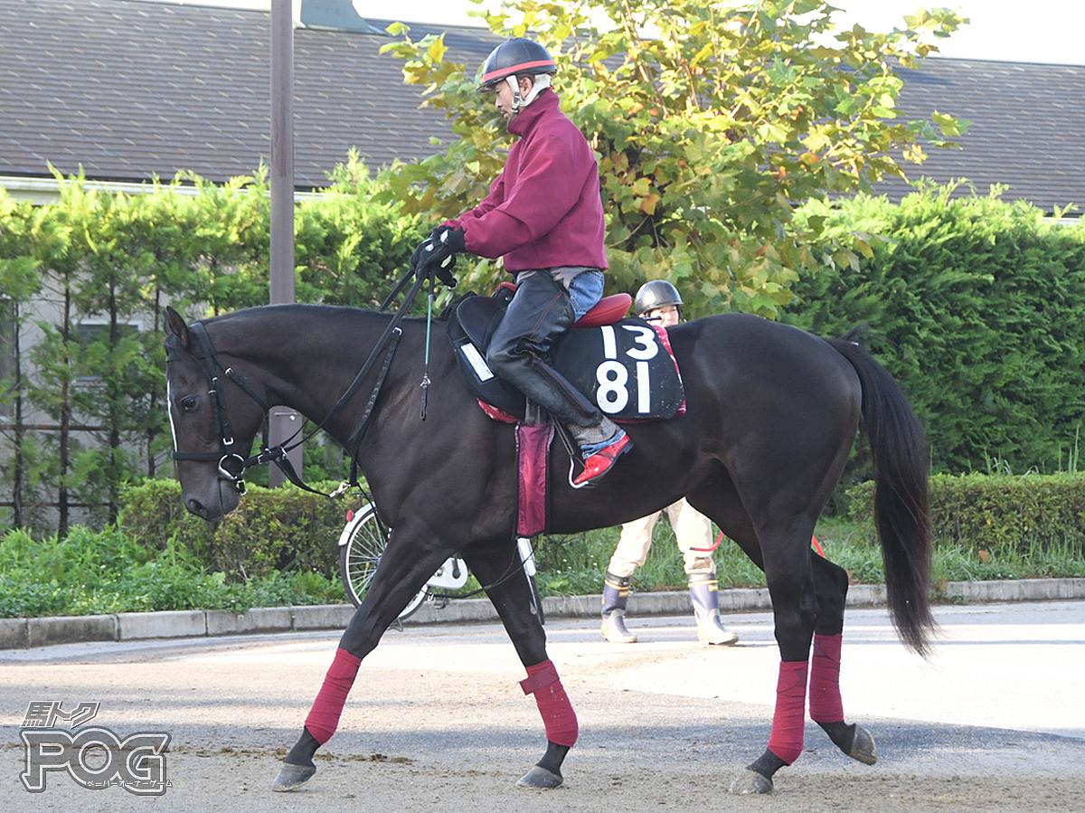 ヴァンフレの馬体写真