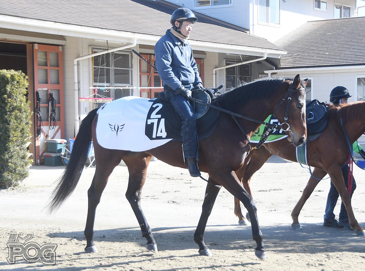 グラウベンの馬体写真