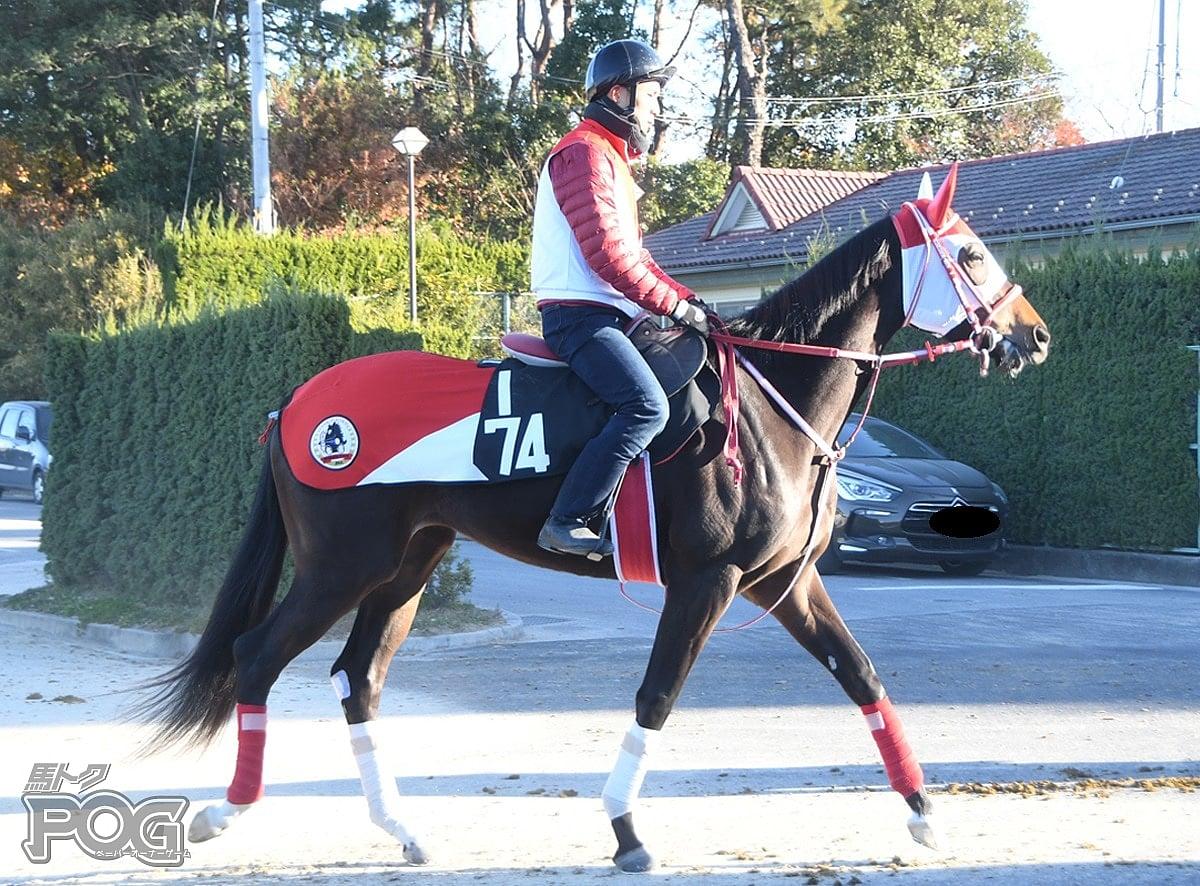 エルモーソの馬体写真