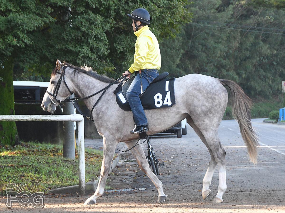 エールショーの馬体写真