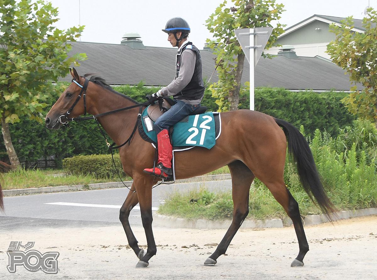 ヴィンテージパールの馬体写真