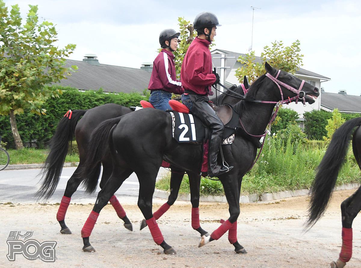ラペールノアールの馬体写真