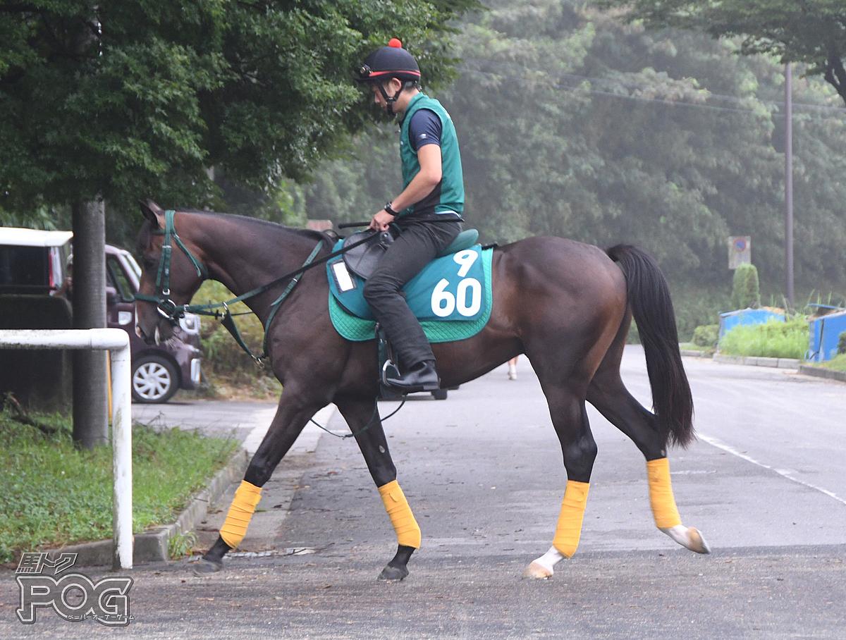 ヴィンセントの馬体写真