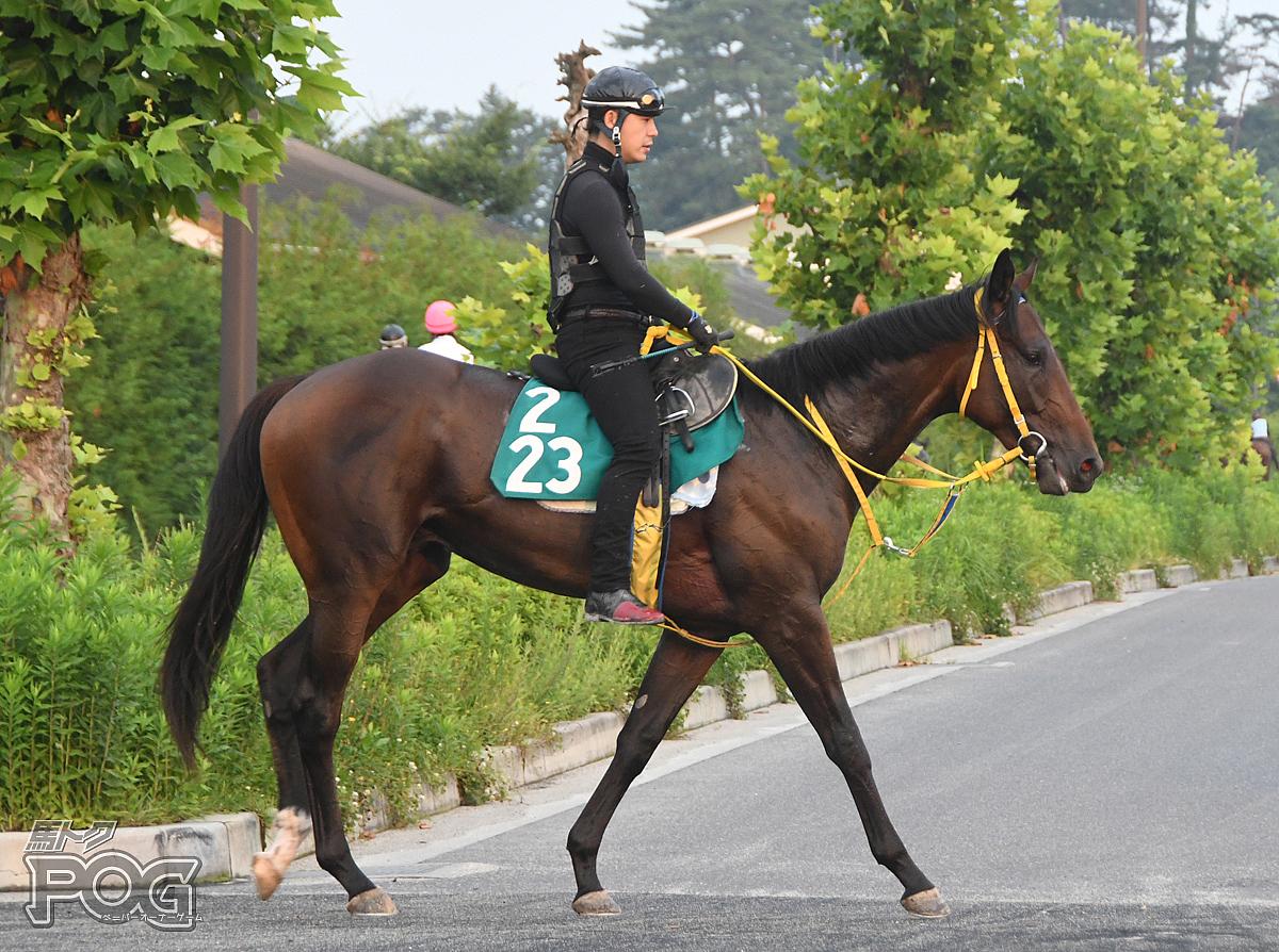 ラティーノヒートの馬体写真