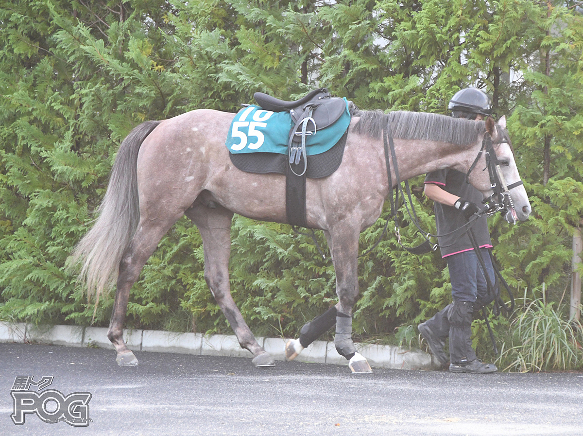 サインの馬体写真