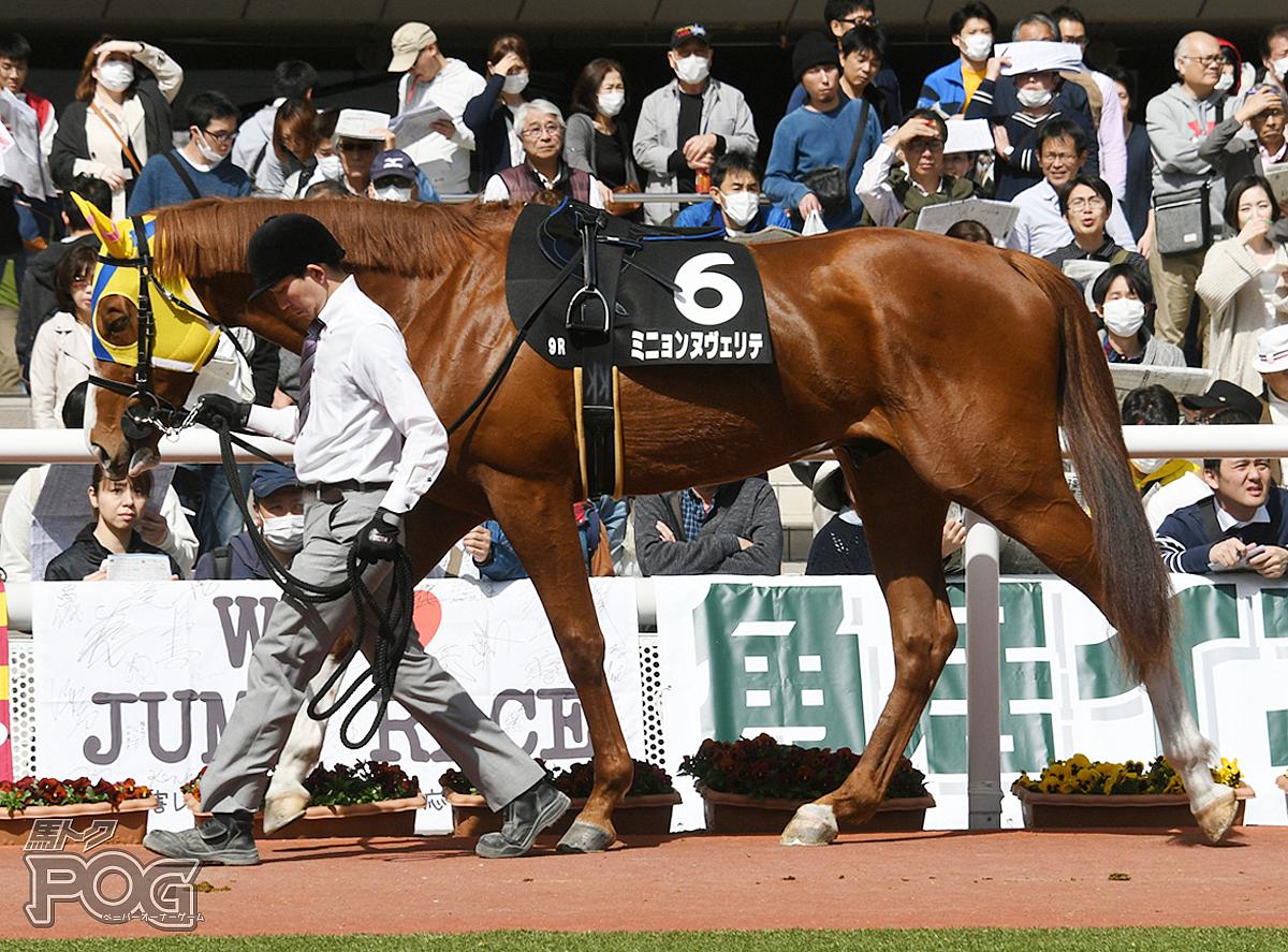 ミニョンヌヴェリテの馬体写真