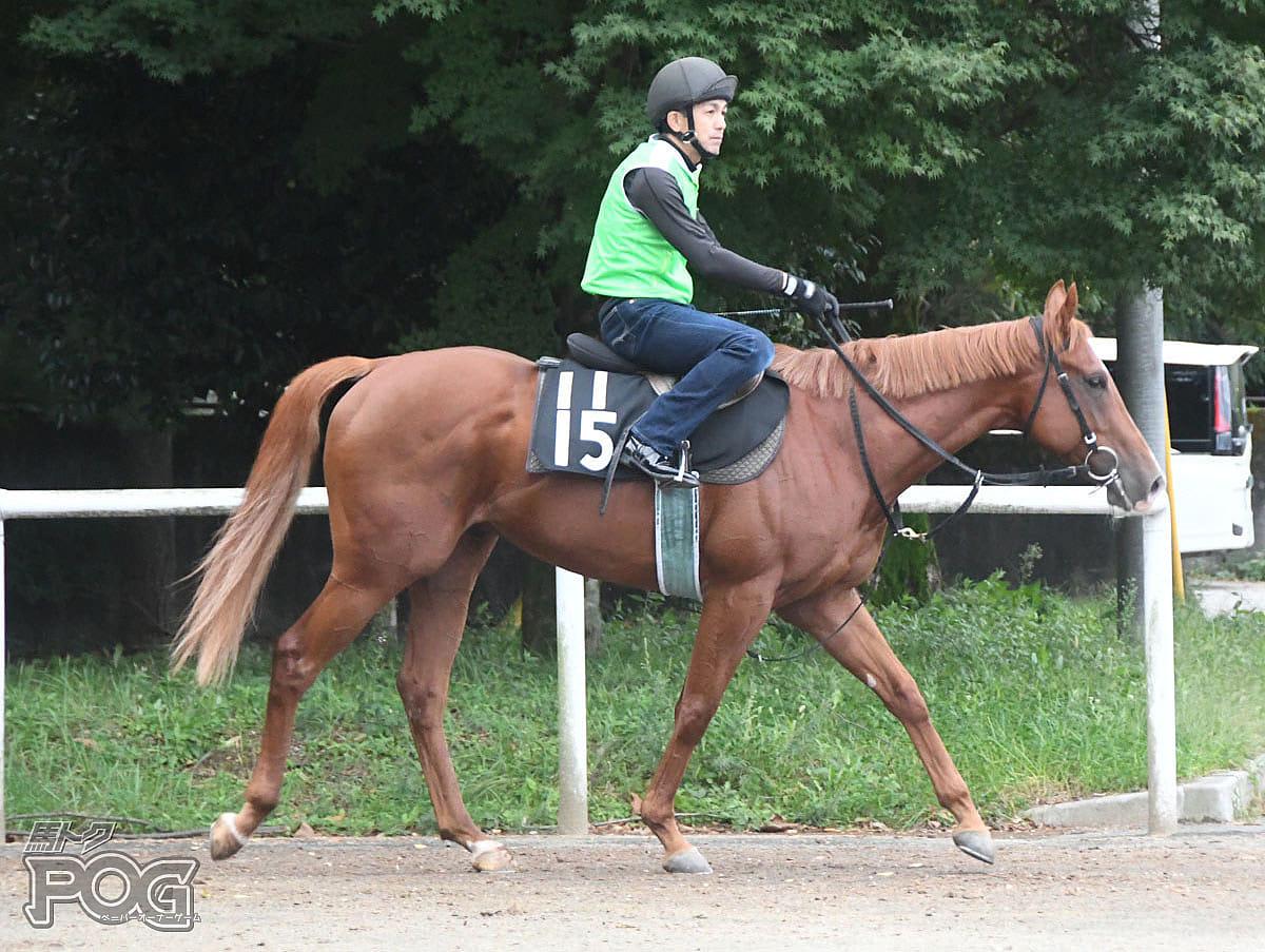 ラフィングマッチの馬体写真