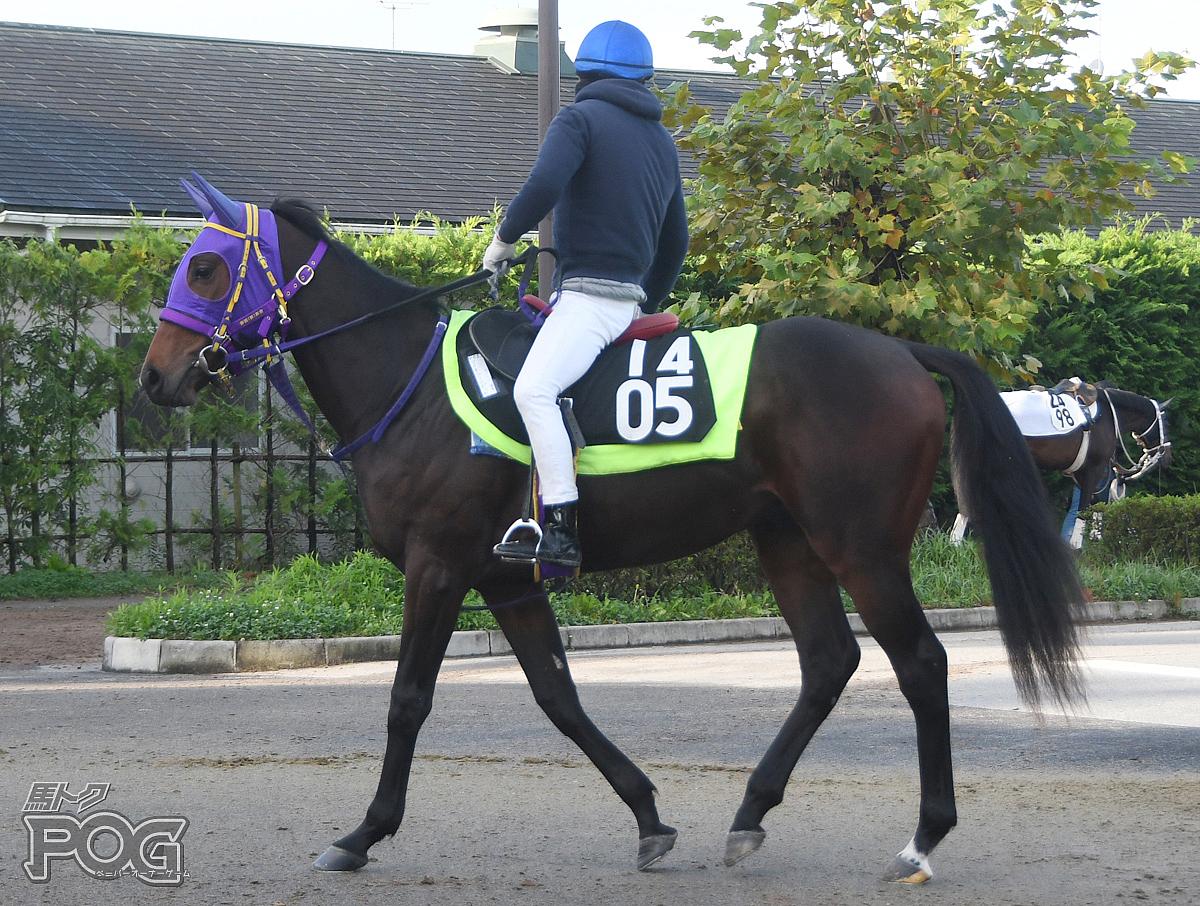 マイネルマリポッサの馬体写真