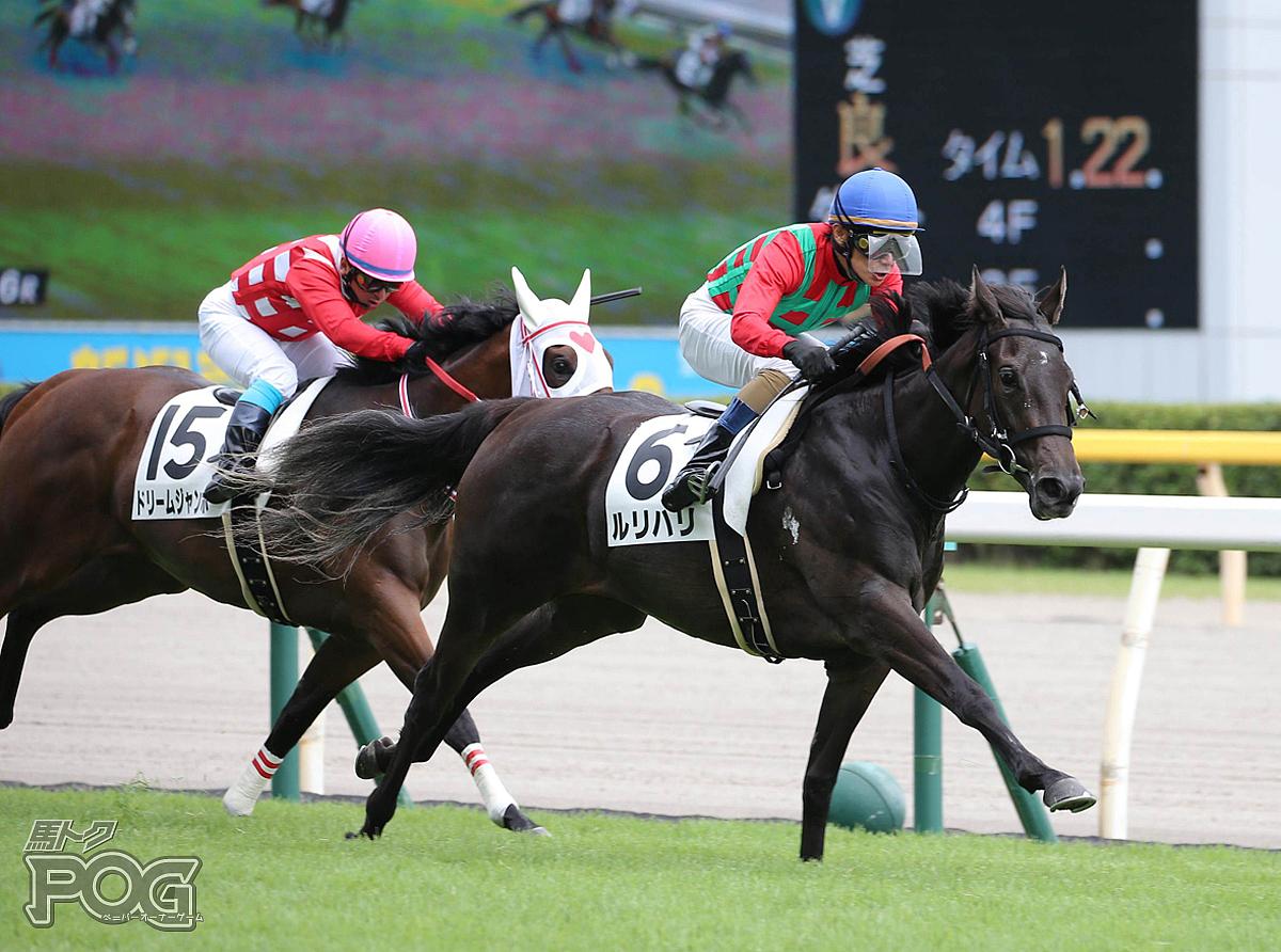 ルリハリの馬体写真