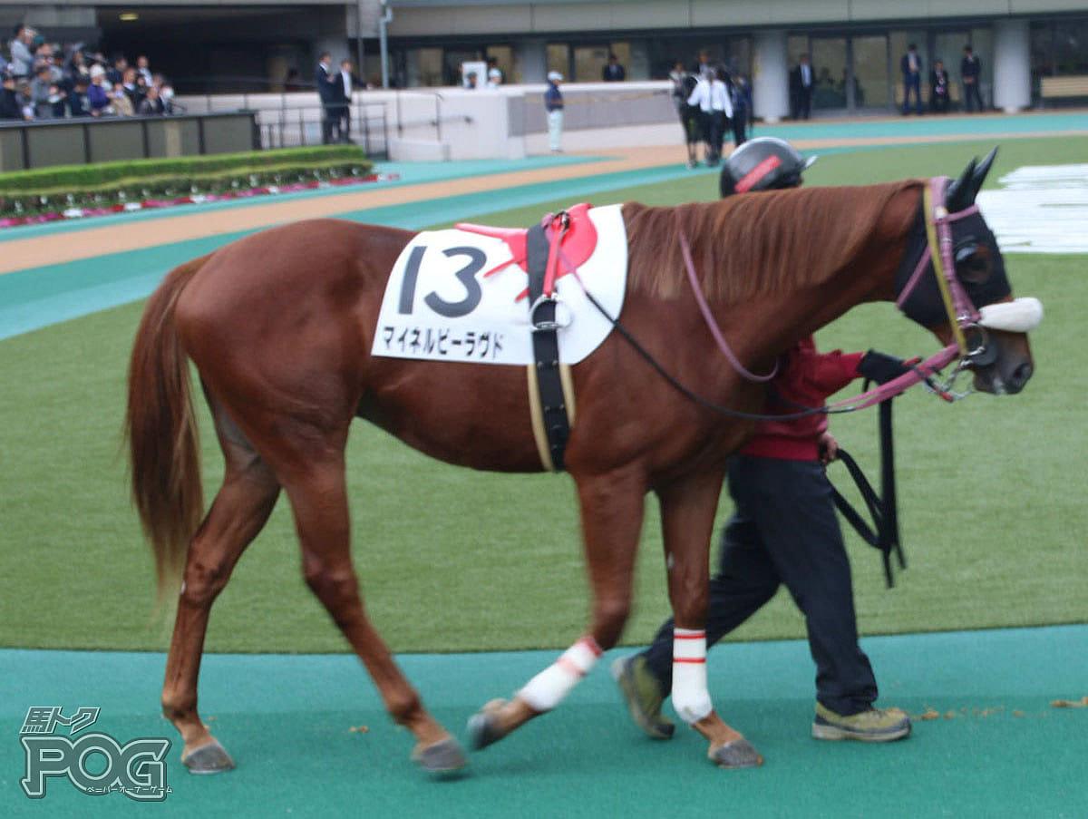 マイネルビーラヴドの馬体写真