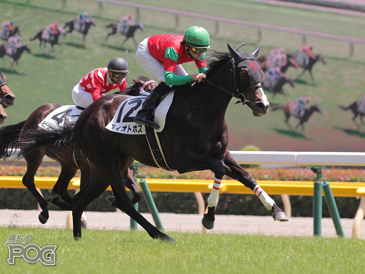 ヴィオトポスの馬体写真