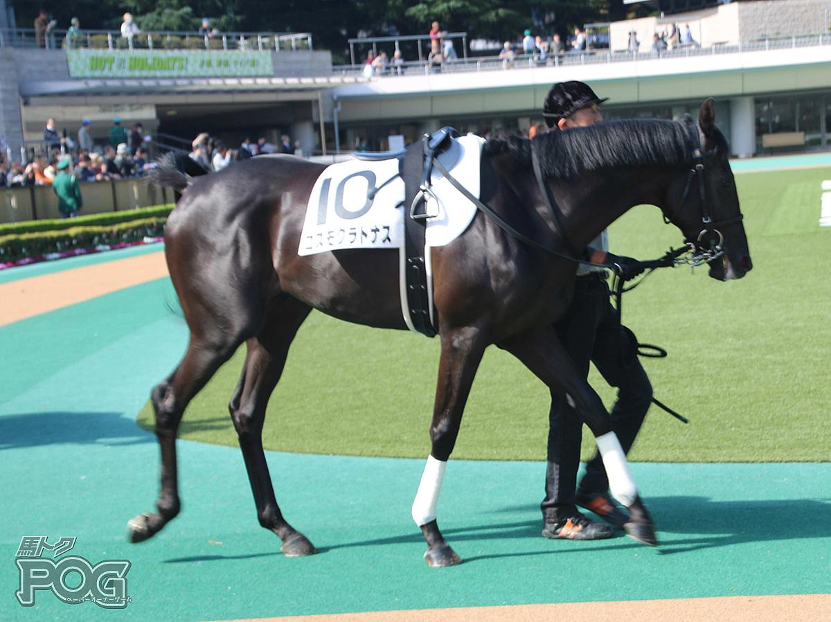 コスモグラトナスの馬体写真
